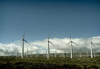 Создание ветропарка в Курганской области выходит на новый этап