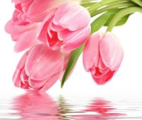 С днём Весны! С 8 марта!