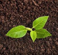 Плодородный грунт и качественный посадочный материал от компании «ЦМП»